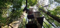 Bermain di Atap Hutan Gunung Halimun Salak