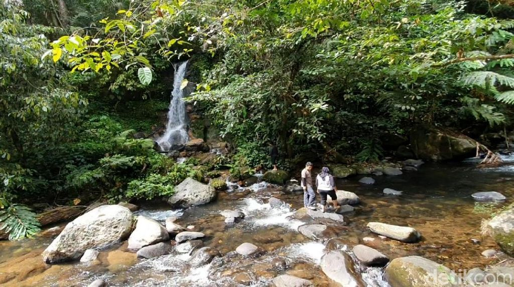 Potensi Wisata di Hutan Hujan Terluas Pulau Jawa