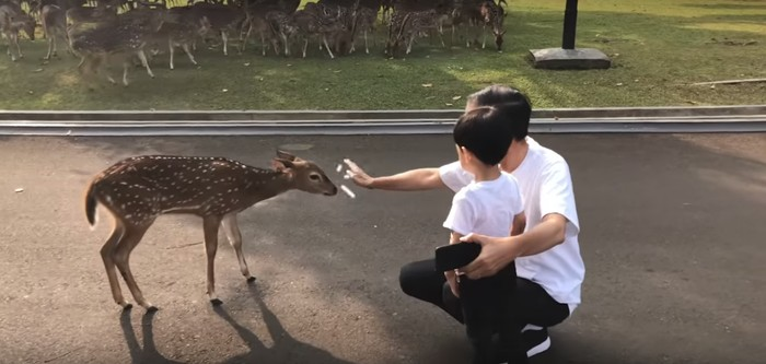 Jokowi dan Jan Ethes kasih makan rusa (Foto: screenshoot video Vlog Jokowi)