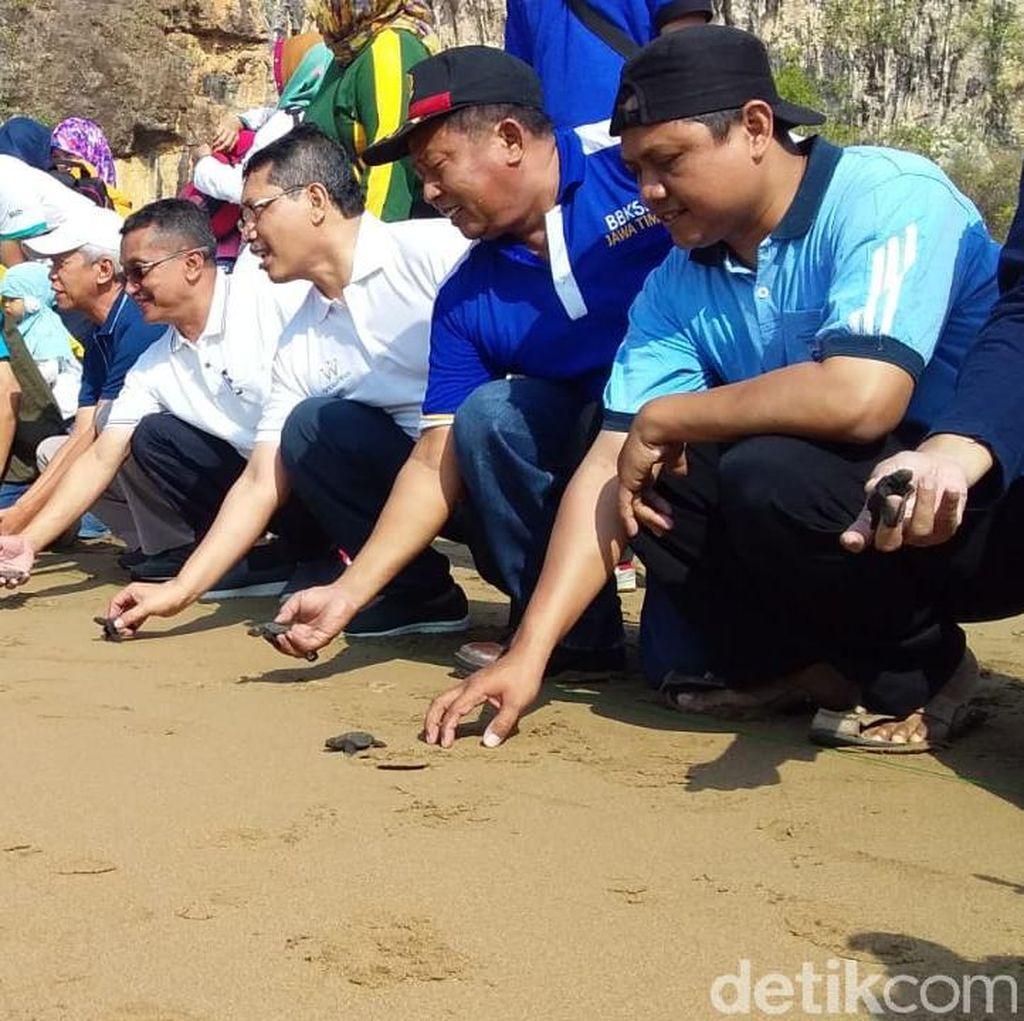 World Cleanup Day di Pacitan, Bersih-bersih Kali dan Pelepasan Tukik