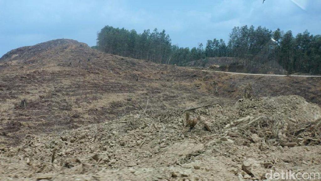 Berstatus HTI, Lahan Tanoto di Ibu Kota Baru Harus Diganti Rugi