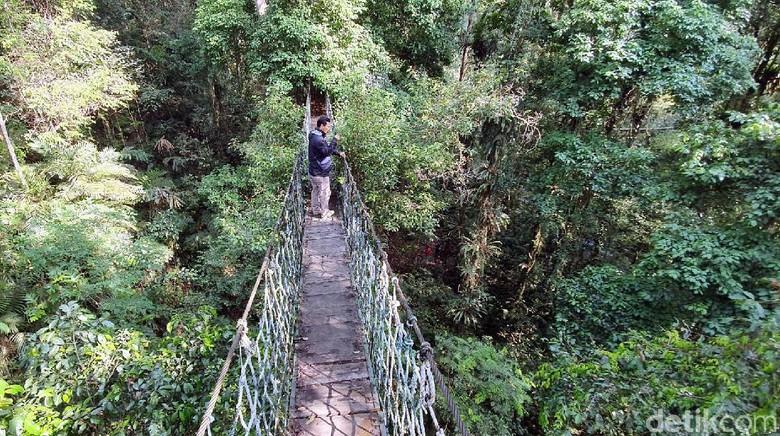 Canopy Trail di Gunung Halimun Salak (Syahdan Alamsyah/detikcom)