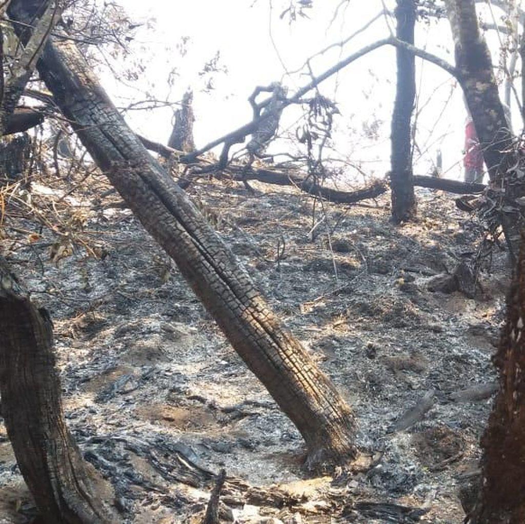 Kondisi Medan Jadi Kendala Pemadaman Kebakaran di Gunung Slamet