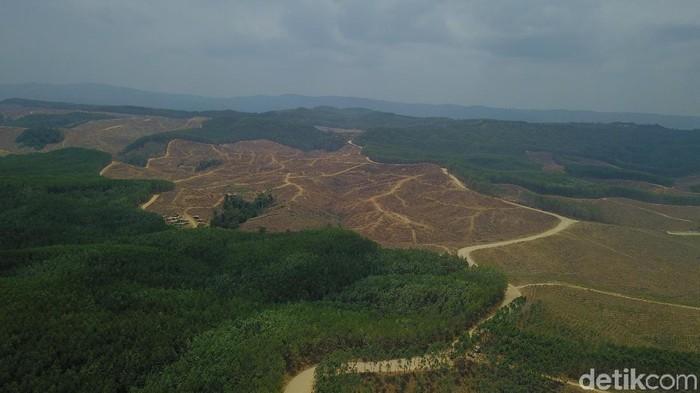 Hutan Akasia milik Sukanto Tanoto
