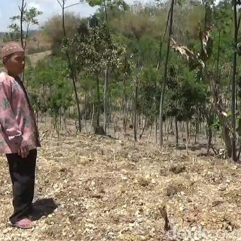 Ini Kata Wagub Emil Soal Pemblokiran Pupuk Subsidi di Tulungagung