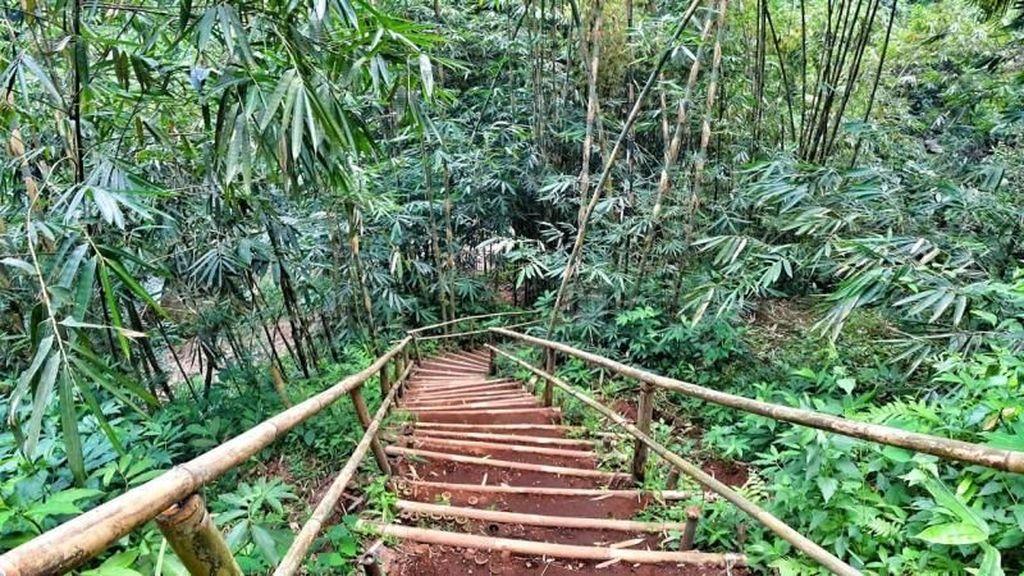 Foto: Bukan di Jepang, Ini Hutan Bambu Keren di Banyumas