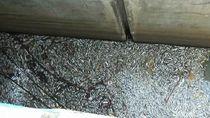 Ribuan Ikan di Polder Tegal Mati Mendadak