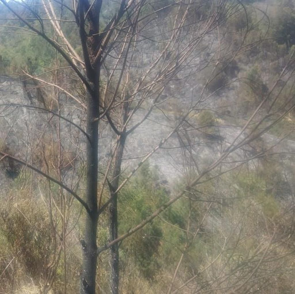 Pemadaman Kebakaran di Jalur Pendakian Gunung Semeru Terkendala Medan