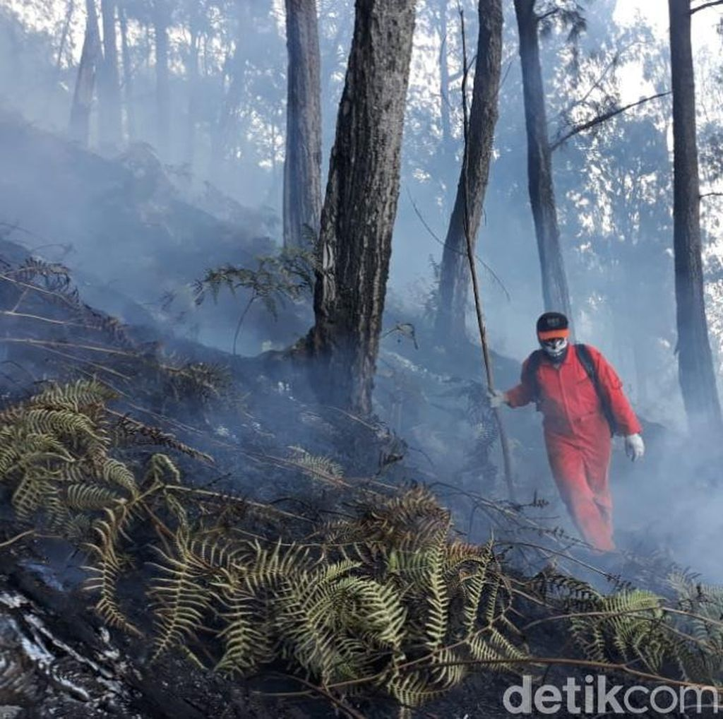 Jalur Pendakian Gunung Arjuno Kembali Ditutup karena Rawan Kebakaran