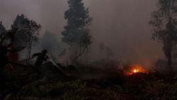 Lalai Tangani Karhutka, Kapolsek di Riau Dicopot