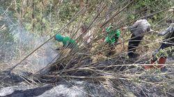Kebakaran di Gunung Sindoro Berhasil Dipadamkan
