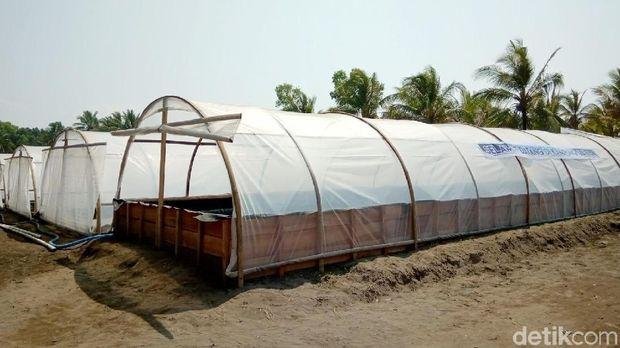 Kampung Garam di Kebumen