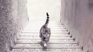 Tes Kepribadian: Kucing Ini Naik atau Turun Tangga?