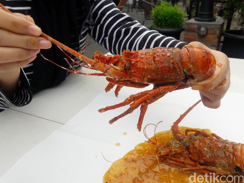 rekomendasi makan lobster