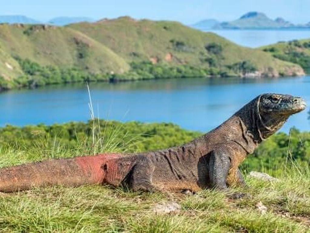 Bartolome di Ekuador (Foto: Shutterstock/CNN)