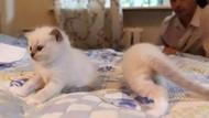 Kumpulan Foto Kucing yang Gagal Tapi Lucu