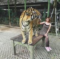 Berfoto dengan harimau saat liburan ke Phuket, Thailand. (fykaaschaa/Instagram)