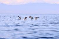 Suasana pantai Lovina tenang dan tradisional. Lovina terkenal dengan pantainya yang berpasir hitam, kafe-kafenya yang besar dan wisata melihat lumba-lumba. (iStock)