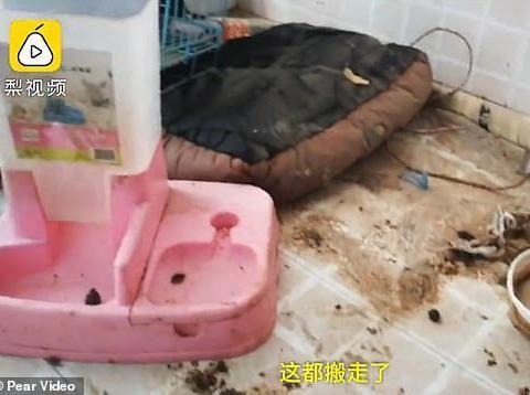 Kondisi tempat tinggal selebgram Lisa Lin.