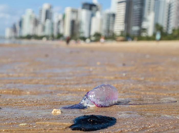 Tumpahan minyak terlihat di area pantai Boa Viagem, Brasil (REUTERS/Diego Nigro)