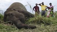 Tersambar Petir saat Badai Besar, 18 Gajah di India Mati