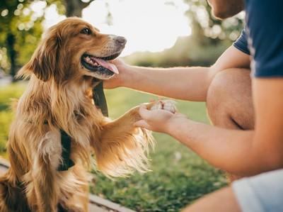 Ada Lowongan Kerja Jagain Anjing Lucu dan Dibayar Rp 578 Juta Nih