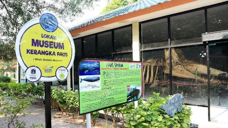 Museum Kerangka Paus di Pulau Tidung Kecil (Randy/detikcom)