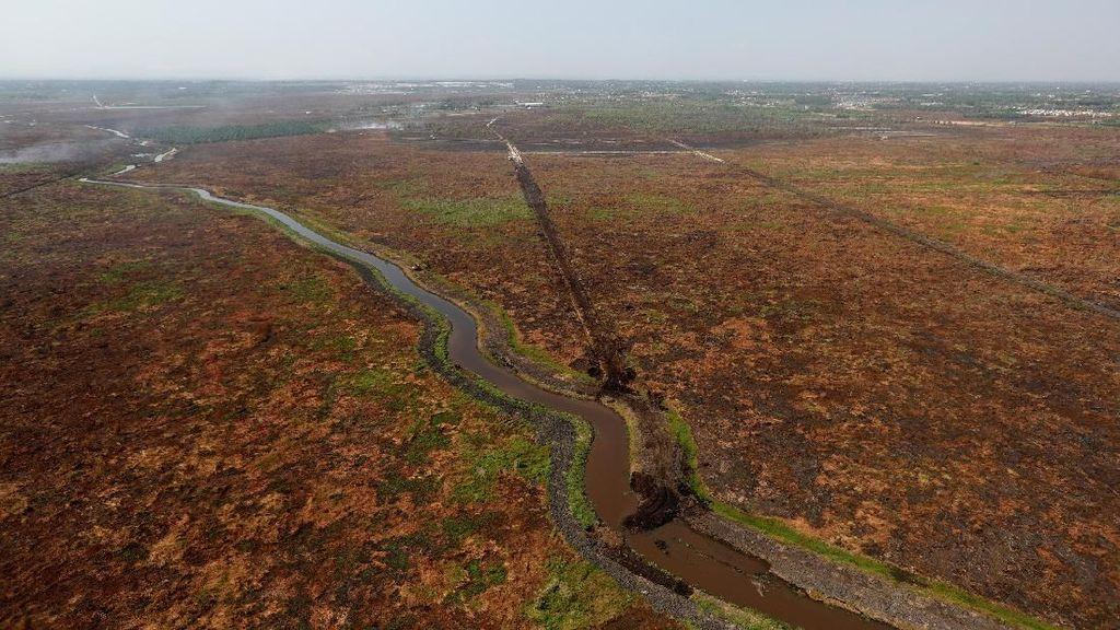 Penampakan Perubahan Hutan Kalimantan dari 1990-2019