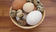 Kenali Ciri dan Karakter 5 Jenis Telur yang Paling Sering Dikonsumsi
