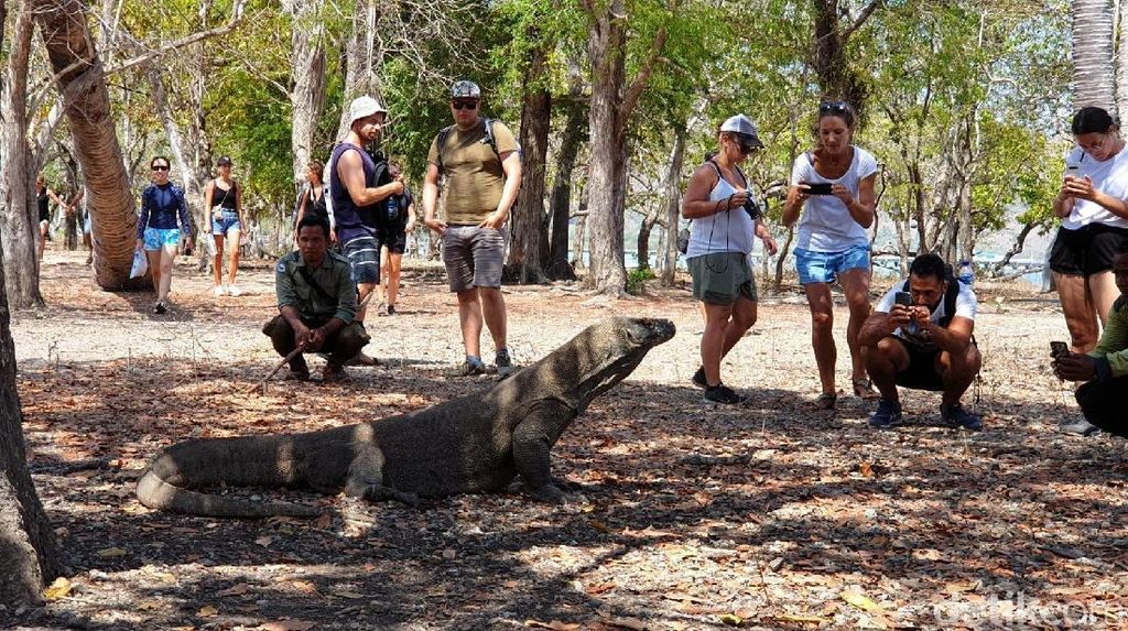 Luhut Sebut Pulau Komodo akan Dibuat Jadi Jurassic Park