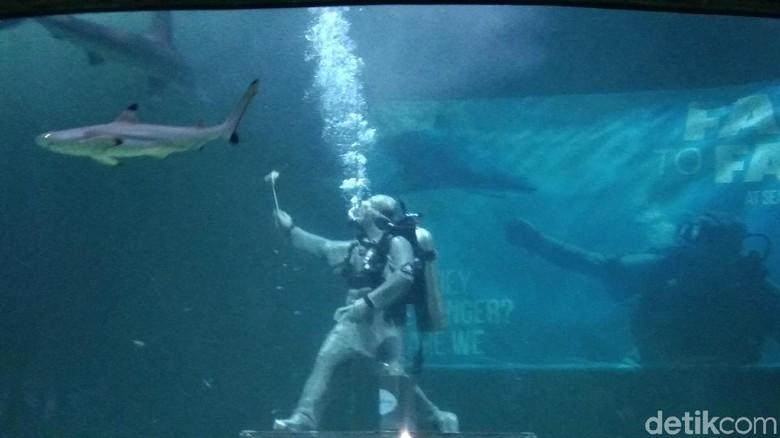 Sea World Ancol. (Foto: Elmy Tasya Khairally/detikcom)