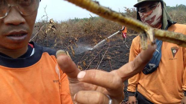 Ya Ampun, Ada lagi 'Ular Berkaki' di Riau