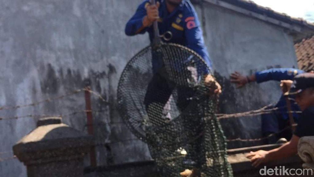 Nyemplung di Got, Anjing di Denpasar Berhasil Dievakuasi