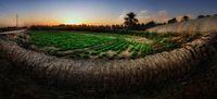 Arab Saudi Punya Oasis Terbesar di Dunia