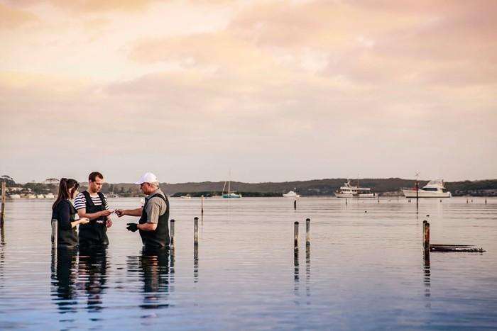Pengalaman tak terlupakan ini bisa didapatkan di Coffin Bay. Di mana para pengunjung akan diajak langsung ke dalam peternakan tiram yang ada di tengah laut. Foto: Istimewa