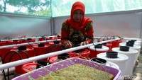 Pada 2018, Pertamina melanjutkan memberikan bantuan untuk pengolahan hasil budidaya hidroponik agar memiliki nilai ekonomi tinggi. Bantuan yang diberikan berupa fasilitas dan peralatan pengolahan tomat hasil budidaya hidroponik, sehingga bisa diolah menjadi kerupuk tomat, brownis, dan saus tomat.