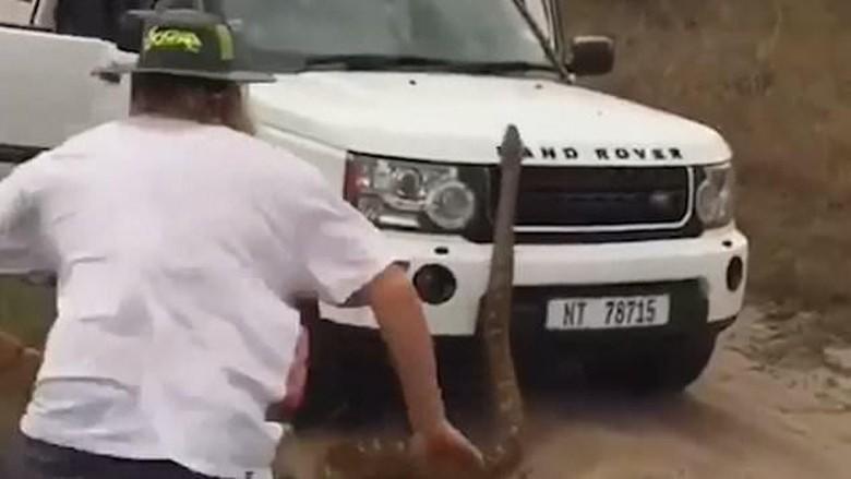 Turis safari dikejar piton (Youtube)