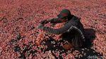 Melihat Produksi Kerupuk Bawang Putih di Rancasari