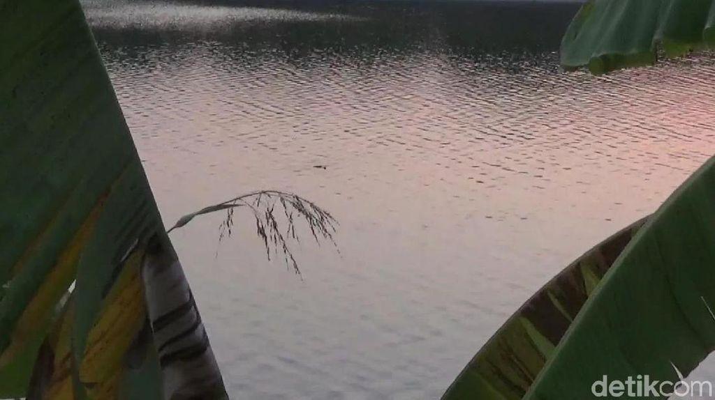 Penampakan Kawanan Buaya di Sungai Bengawan Solo