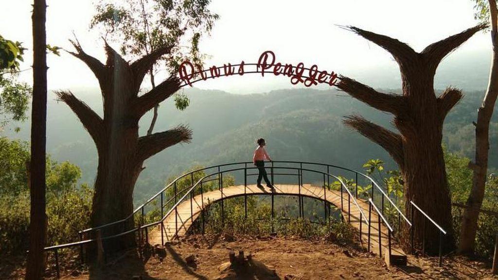 Foto: Seindah Ini Hutan Pinus Yogyakarta