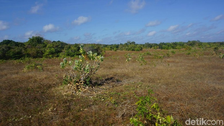 Bentang alam di Pulau Ndana (Afif Farhan/detikcom)