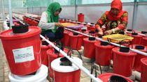 Hidroponik dan Bank Sampah Tingkatkan Kesejahteraan Kaum Ibu di Makassar