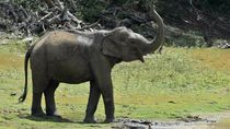 Momen Gajah Mau Rebahan di Mobil Pengunjung Taman Nasional