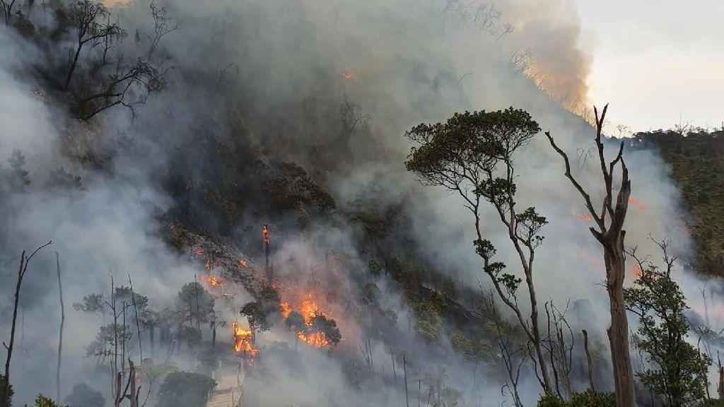 PTPN VII Jelaskan Kebakaran 200 Ha Lahan