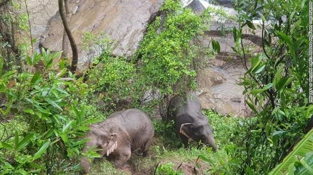Dua gajah lainnya berhasil diselamatkan