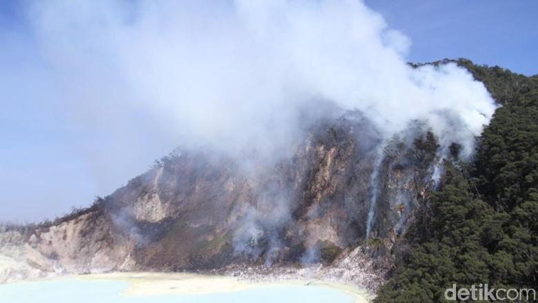 Hutan Kawah Putih yang terbakar (Wisma Putra/detikcom)