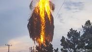 Cetar! Pohon Kelapa Dekat Kampus USU Terbakar Disambar Petir