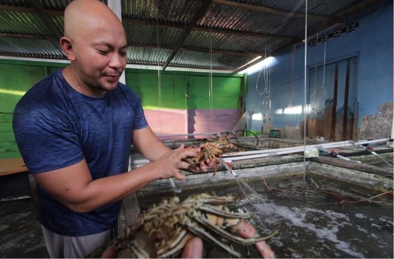 Penampakan Lobster Segar dari Penampungan Binaan BNI