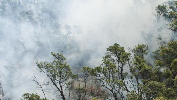 Asap masih membumbung di area kabakaran di Kawah Putih.