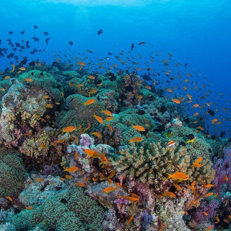 Percaya nggak, Arab Saudi punya dunia bawah laut seindah ini? (Instagram/Visit Saudi)